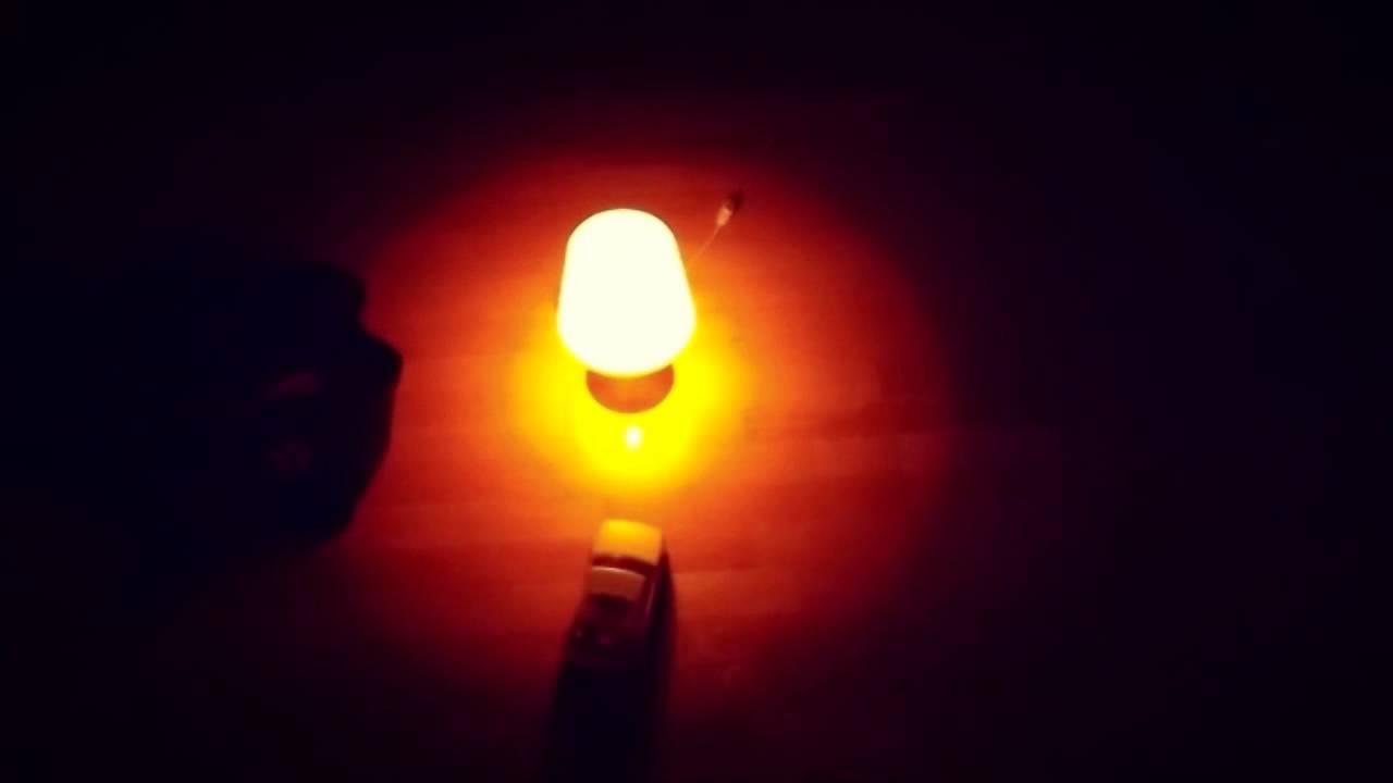 Criatura noctámbulas
